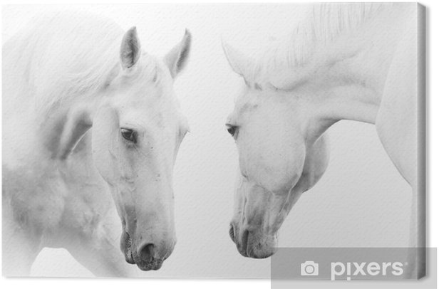 white horses Canvas Print - Themes