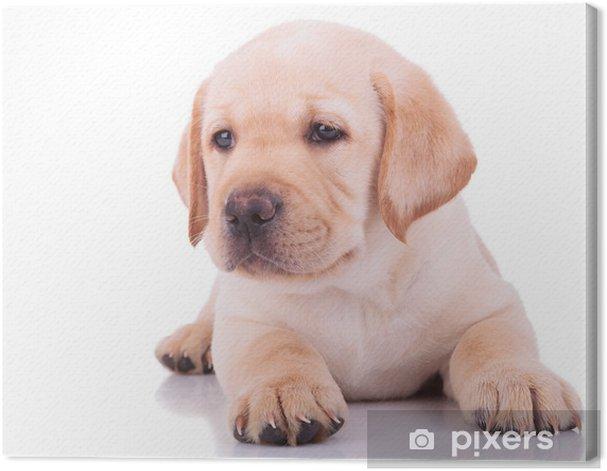 white labrador retriever puppy dog Canvas Print -