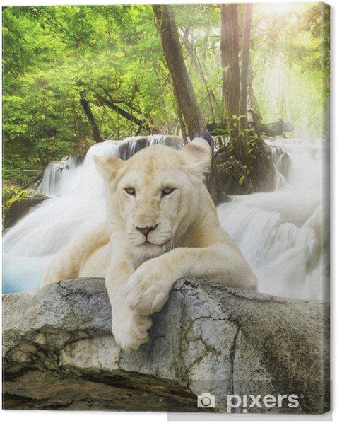 White lion Canvas Print -