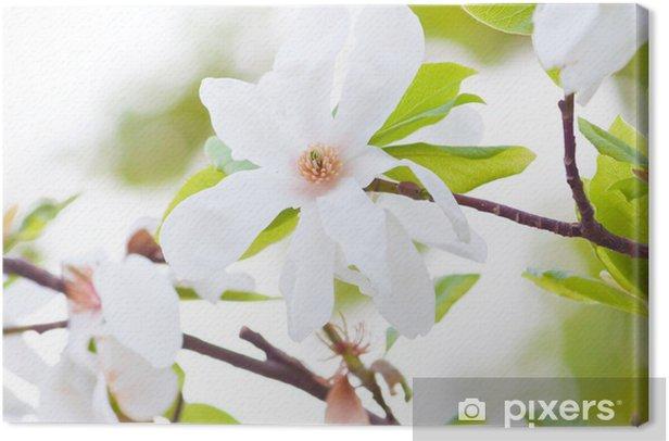 white Magnolia Canvas Print - Themes