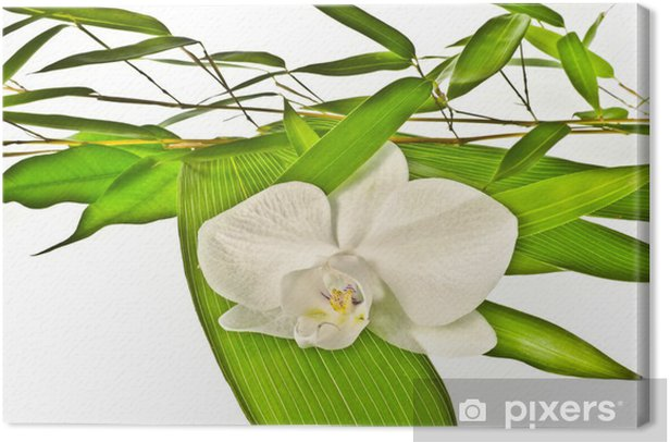 white orchid and bamboo Canvas Print - Flowers