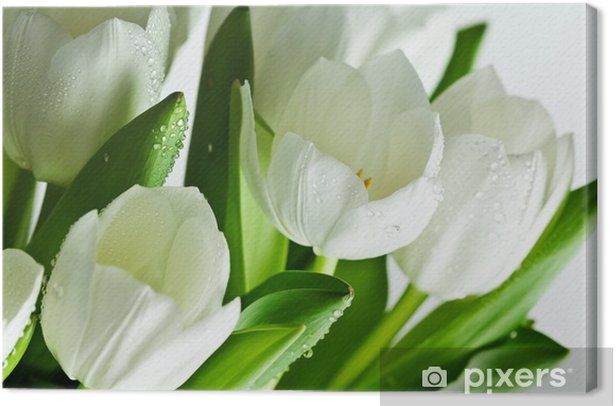 White Tulips Canvas Print - Themes