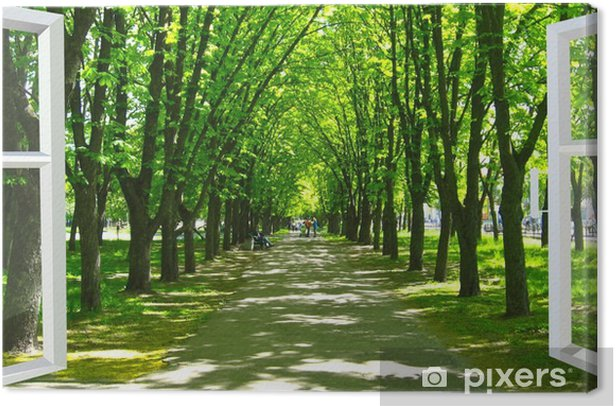 window opened to the beautiful park with many green trees Canvas Print - Themes
