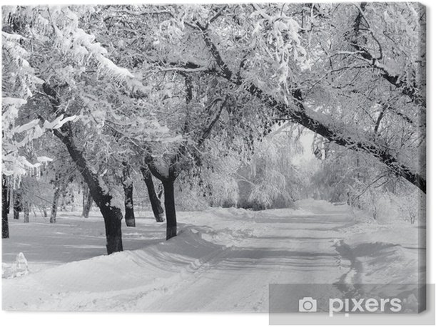 Winter park, scenery Canvas Print - Styles