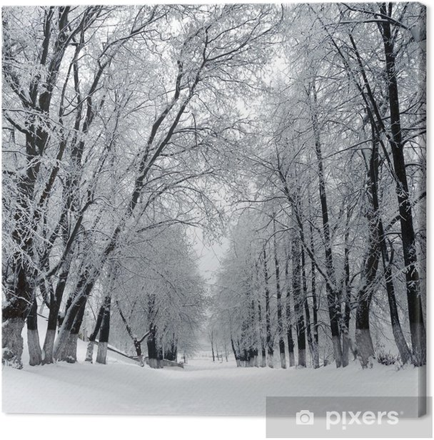 Winter park, scenery Canvas Print - Themes