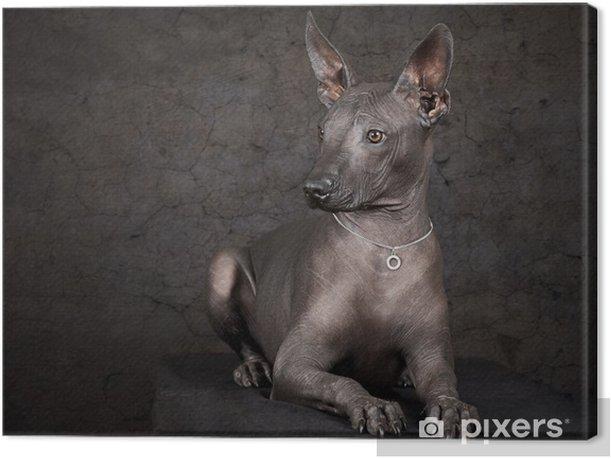 Xolo. Mexican hairless dog Canvas Print - Mammals