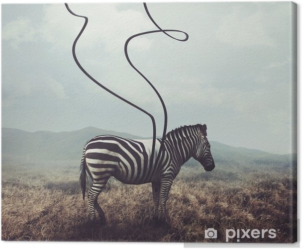 Zebra and stripes Canvas Print - Animals