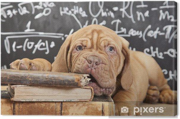 Canvas Puppy kauwen een boek -