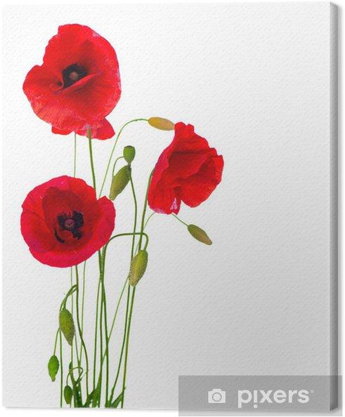 Canvas Rode Papaver bloem geïsoleerd op een witte achtergrond - Bestemmingen