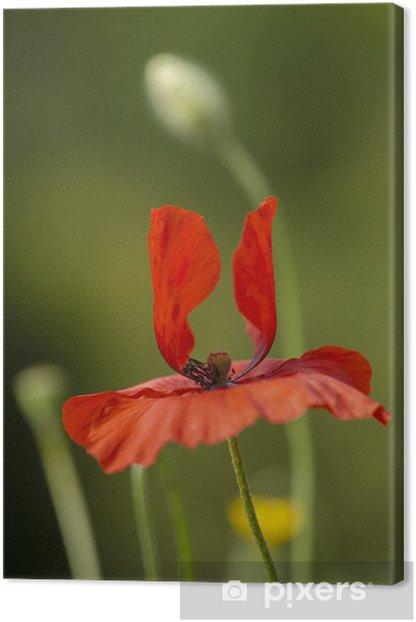 Canvas Rode papaver bloemen - Seizoenen