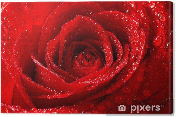 Canvas Rode roos met dauwdruppels - Thema's