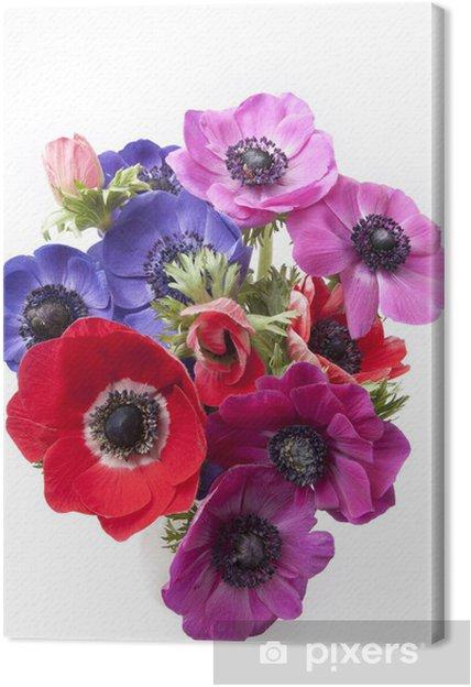 Canvas Samenstelling van anemonen - Bloemen