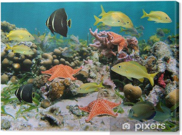 Canvas Sealife in een koraalrif - Koraalrif