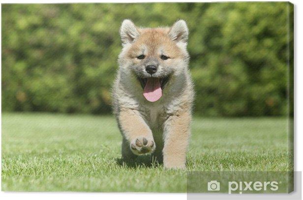 Canvas Shiba Inu puppy running - Zoogdieren