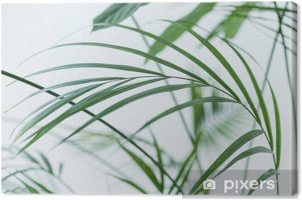 Canvas Sluit omhoog mening van groene palmbladen op vage grijze achtergrond - Bloemen en Planten