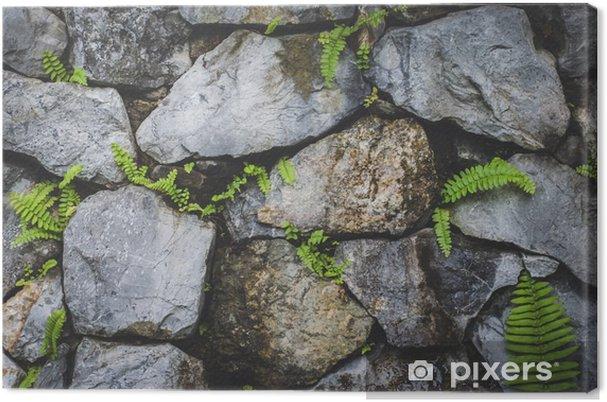 Canvas Stenen muur met planten natuur - Hobby's en Vrije tijd