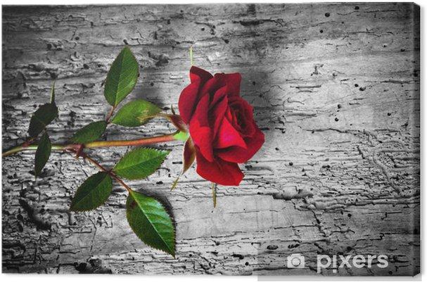 Canvas Su fondo rosa rossa b / n - Thema's