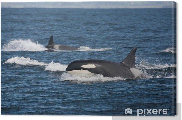 Canvas Team Orca - Onderwater
