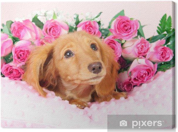 Bed Met Rozen.Canvas Teckel Pup Op Een Bed Van Rozen