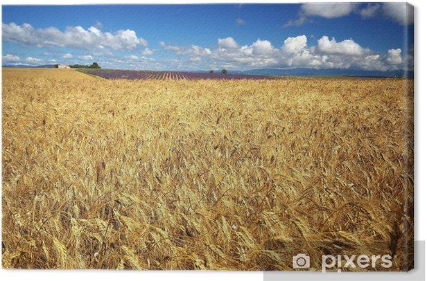 Canvas Teelt van tarwe en lavendel - Landbouw