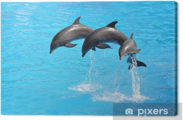 Canvas Three Dolphins - Thema's