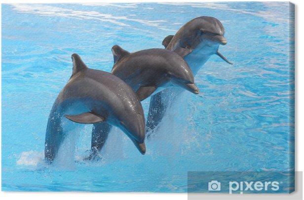 Canvas Trio van Dolfijnen - Thema's