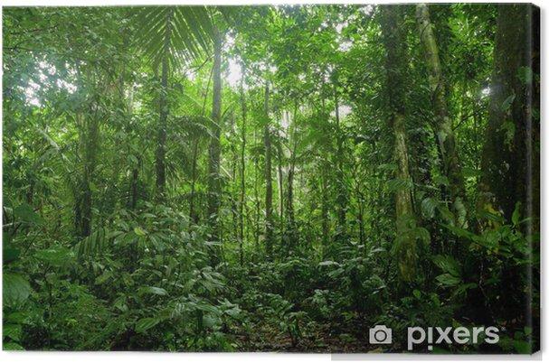 Canvas Tropisch regenwoud landschap, Amazon - Thema's