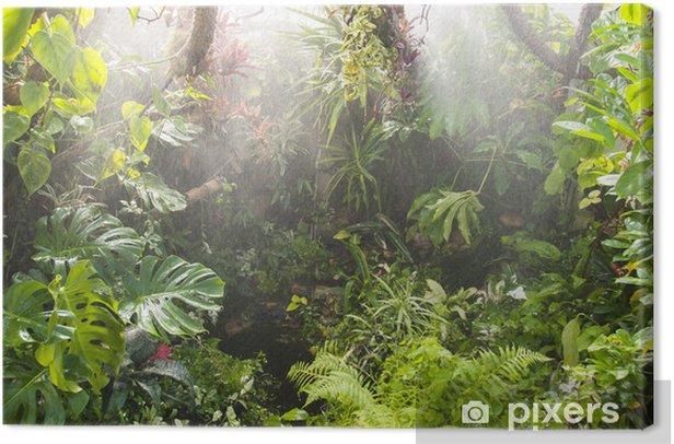 Canvas Tropische bos achtergrond - Thema's