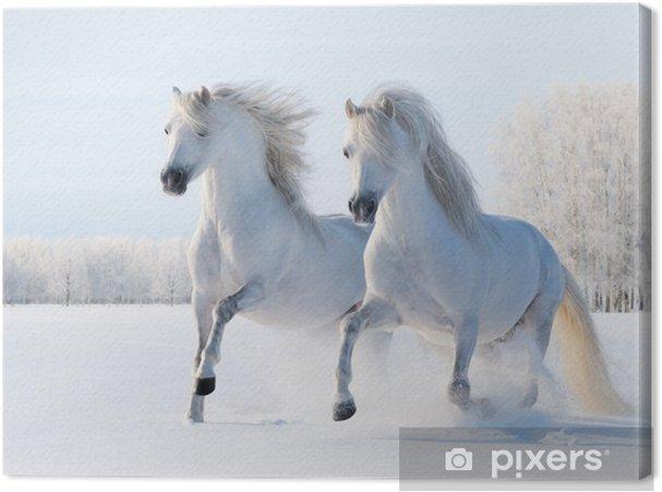 Canvas Twee witte paarden in galop in de sneeuw - Stijlen