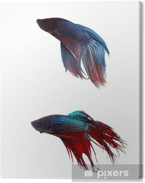 Canvas Vechten vissen e - Onderwater
