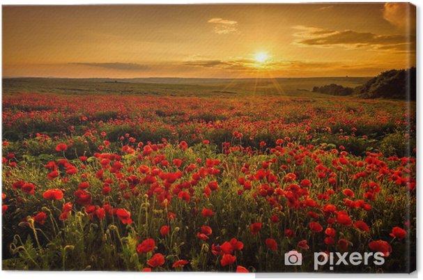 Canvas Veld met klaprozen tijdens zonsondergang - Weiden, velden en gras