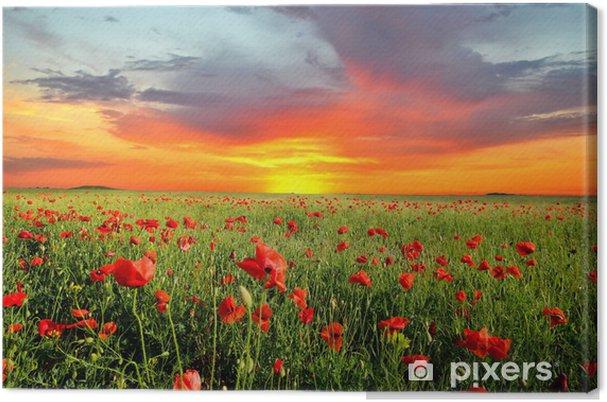 Canvas Veld met klaprozen - Weiden, velden en gras
