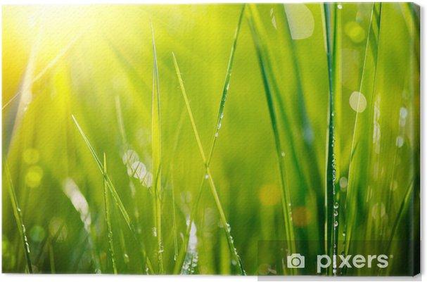 Canvas Vers groen gras met dauw druppels close-up. Soft Focus - Thema's