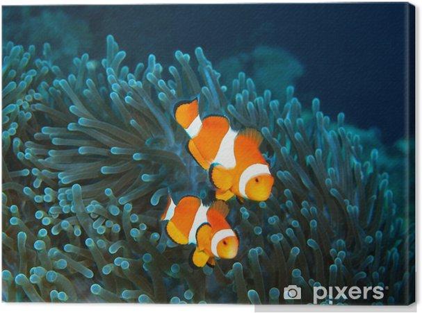 Canvas Vis-clown, eiland Maktan, Filippijnse - Onderwater