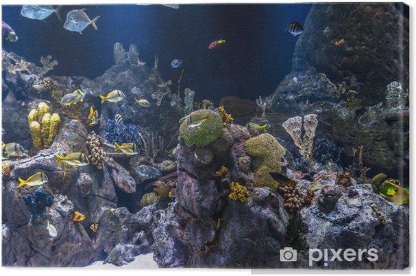 Canvas Vissen zwemmen rond kleurrijke koralen onder water - Thema's