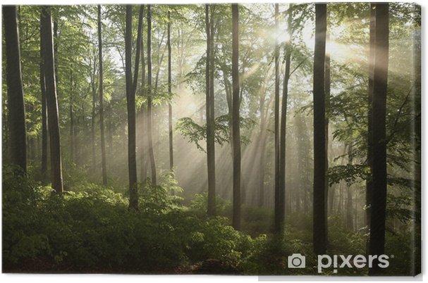 Canvas Voorjaar beukenbos na een paar dagen regen in een mistige ochtend - Thema's