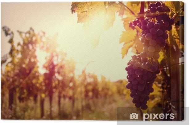 Canvas Wijngaard bij zonsondergang in de herfst oogst. - Thema's