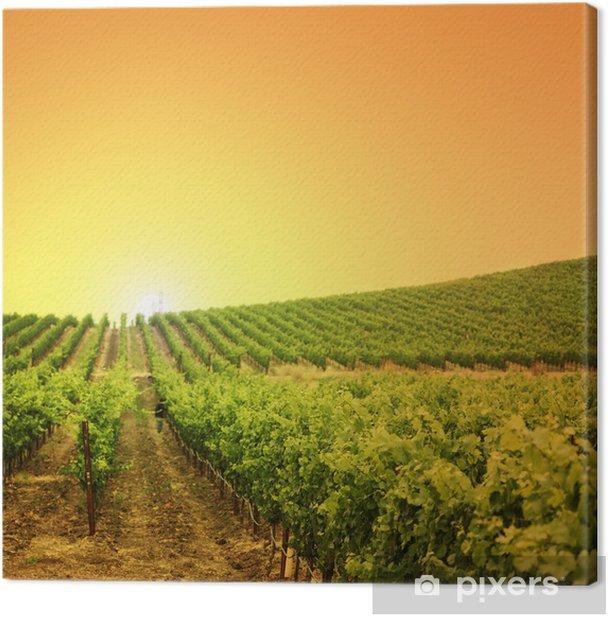 Canvas Wijngaard op een heuvel - Thema's