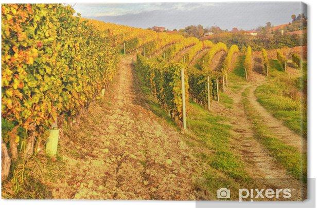 Canvas Wijngaard - Platteland