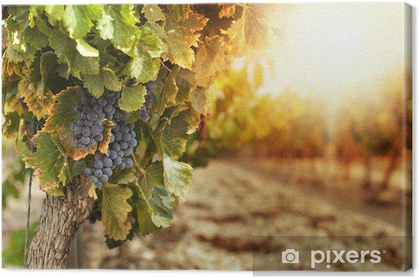 Canvas Wijngaarden bij zonsondergang - Thema's