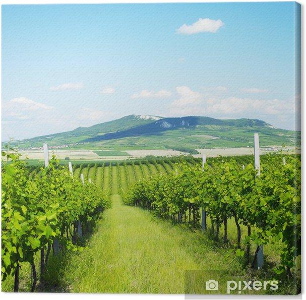 Canvas Wijngaarden, Palava, Tsjechië - Europa
