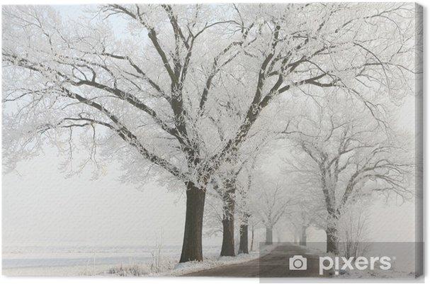 Canvas Winter lane onder de majestueuze oude eiken bomen bedekt met vorst - Platteland