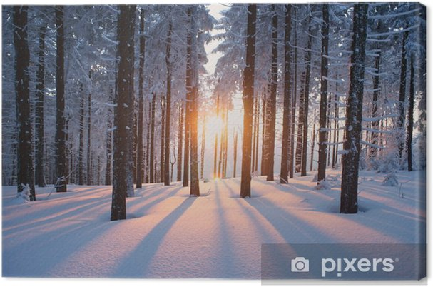 Canvas Winterse zonsondergang in het bos -