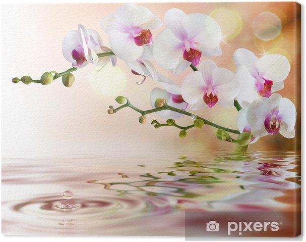 Canvas Witte orchideeën op het water met daling -