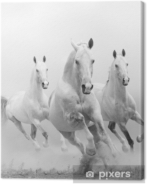 Canvas Witte paarden in stof -