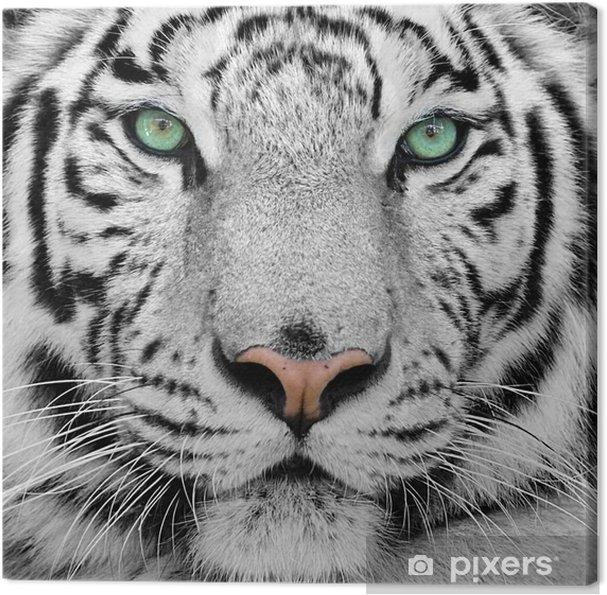 Canvas Witte tijger -