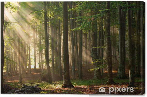 Canvas Zonnestralen in een bos - Thema's