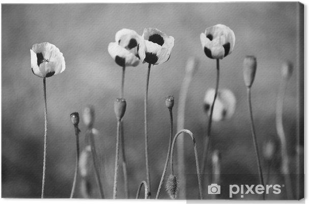 Canvas Zwart en wit poppy bloemen - Bloemen en Planten