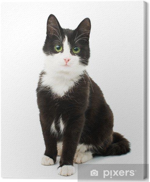 Canvas Zwart-witte kat - Thema's