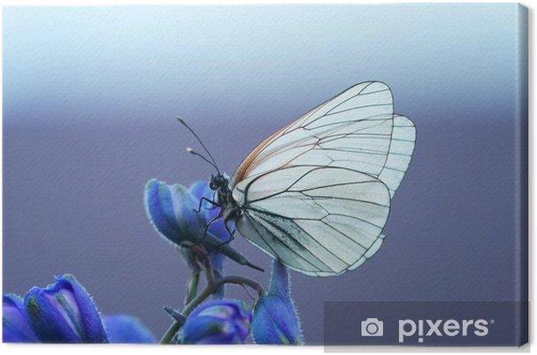 Canvastavla Белая бабочка на синем цветке - Djur